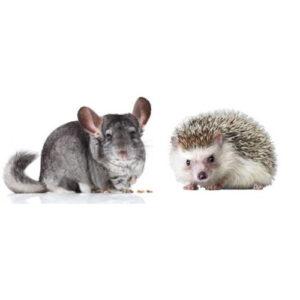 Chinchilla & Tindasvín